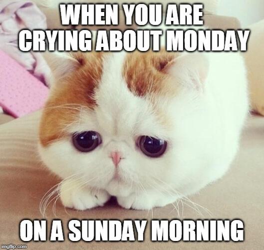 i hate my job meme sunday cat